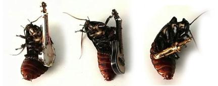 0308-bugs_rock.jpg