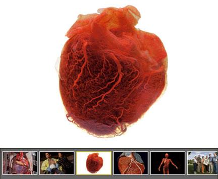 0214-Human_Heart.jpg