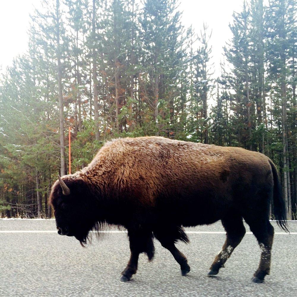 Yellowstone_13.jpg