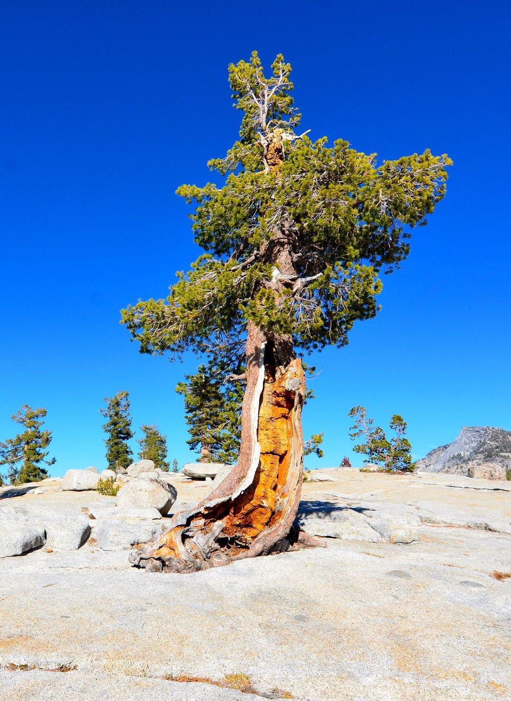 Yosemite_05.jpg