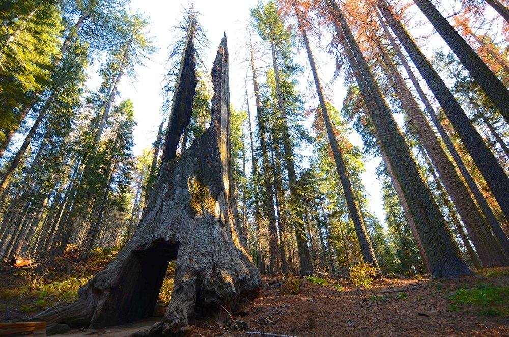 Yosemite_06.jpg