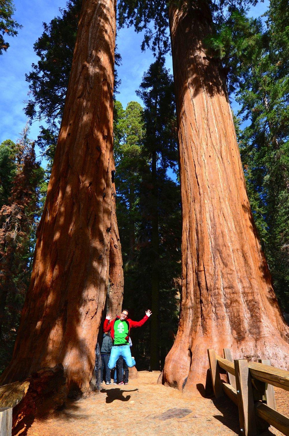 Sequoia_03.jpg