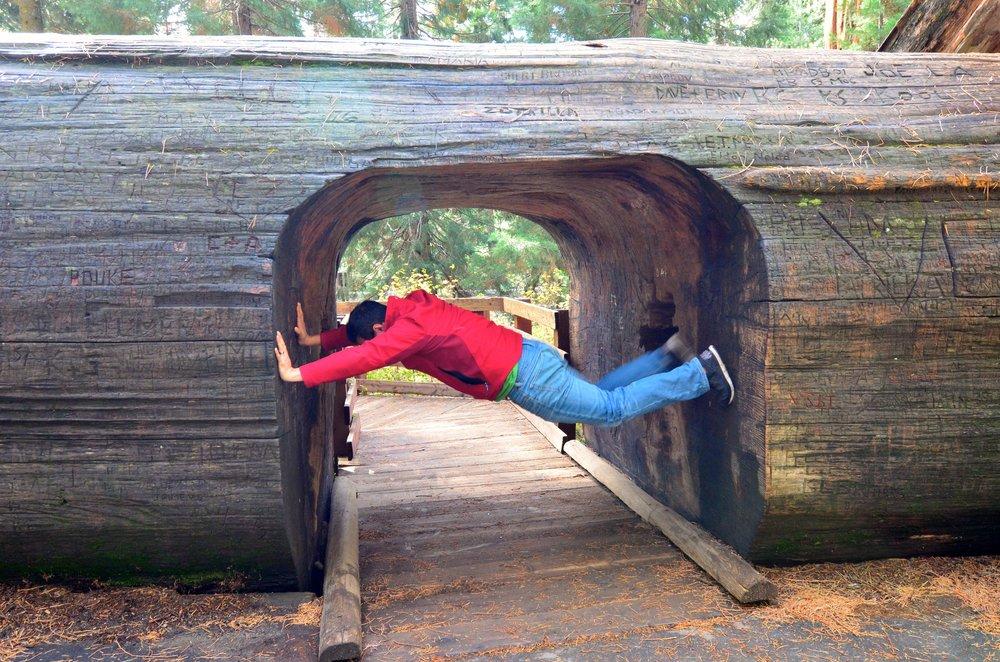 Sequoia_04.jpg