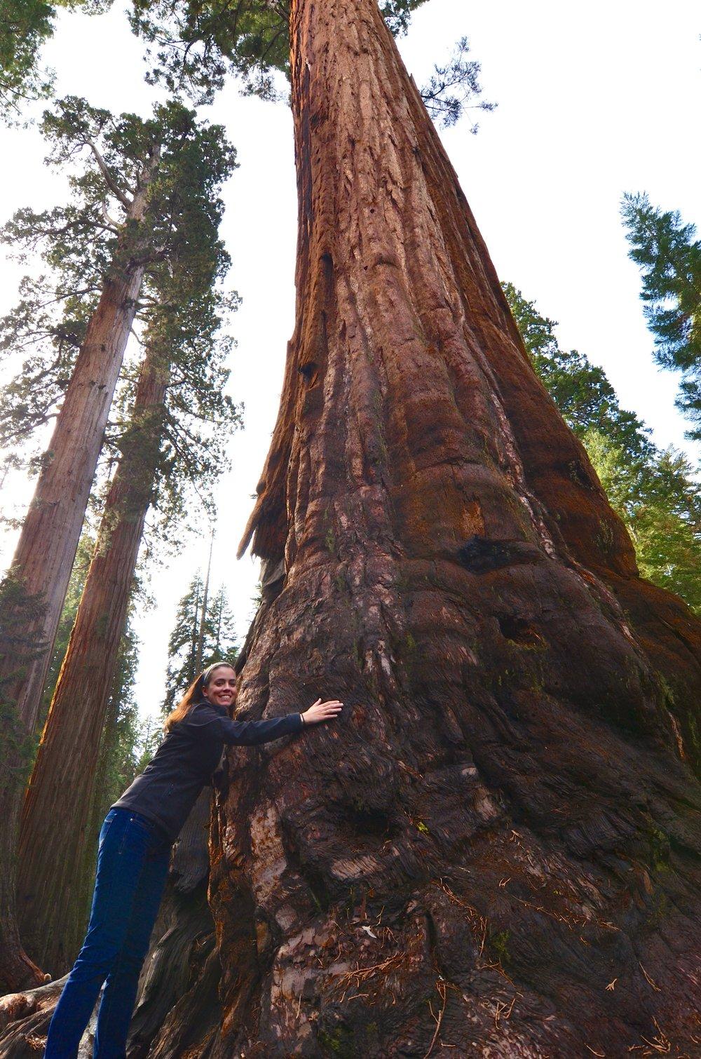 Sequoia_07.jpg