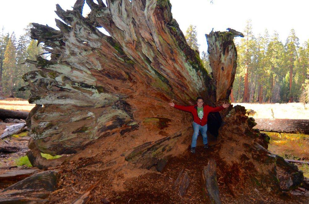 Sequoia_08.jpg