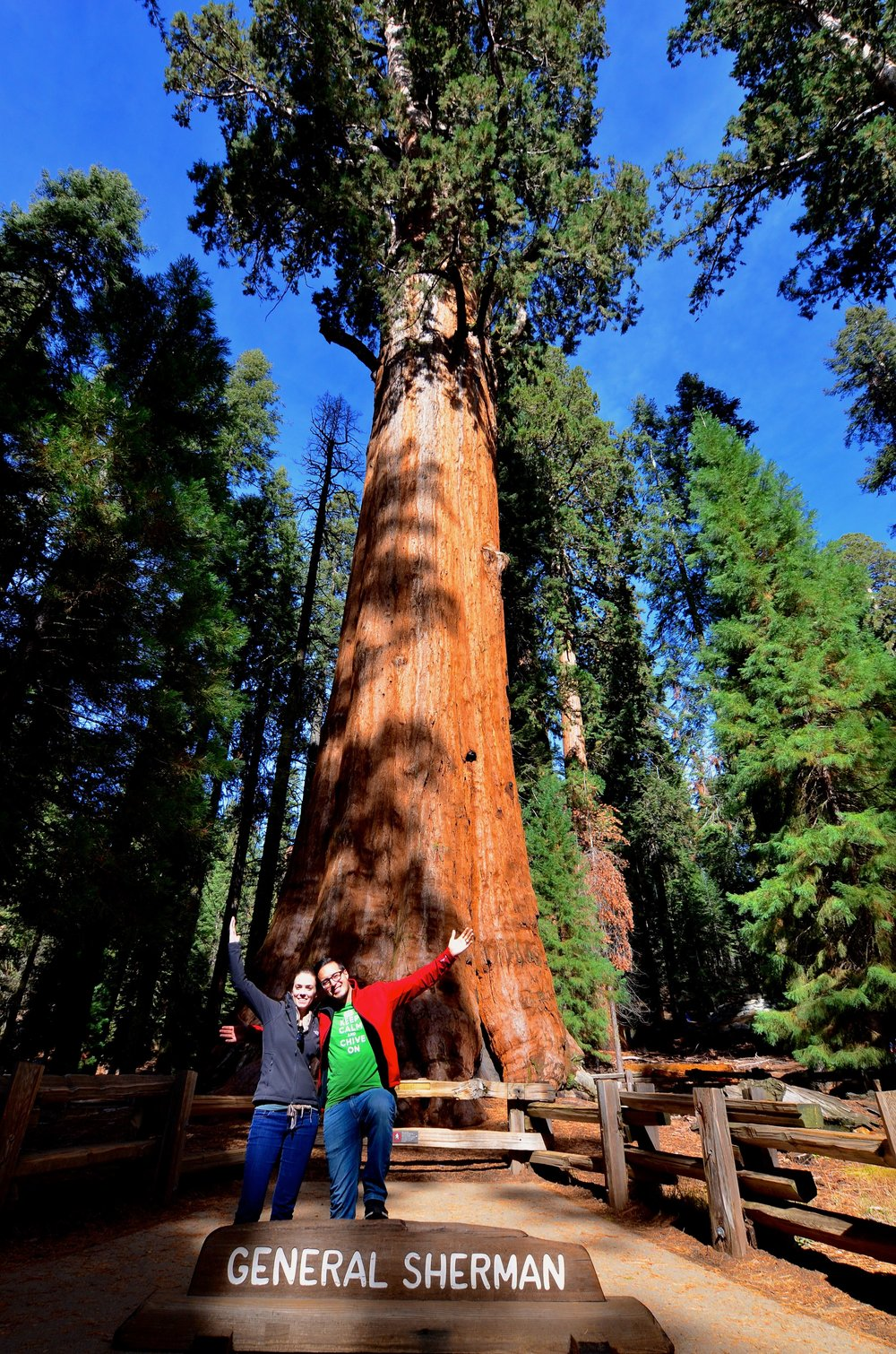 Sequoia_06.jpg
