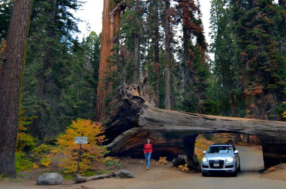 Sequoia_12.jpg