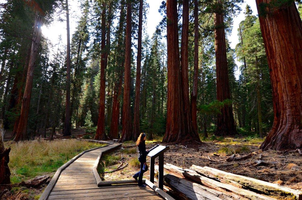 Sequoia_11.jpg