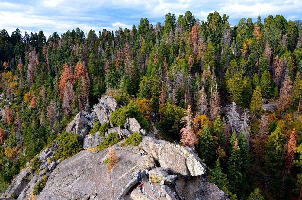 Sequoia_16.jpg