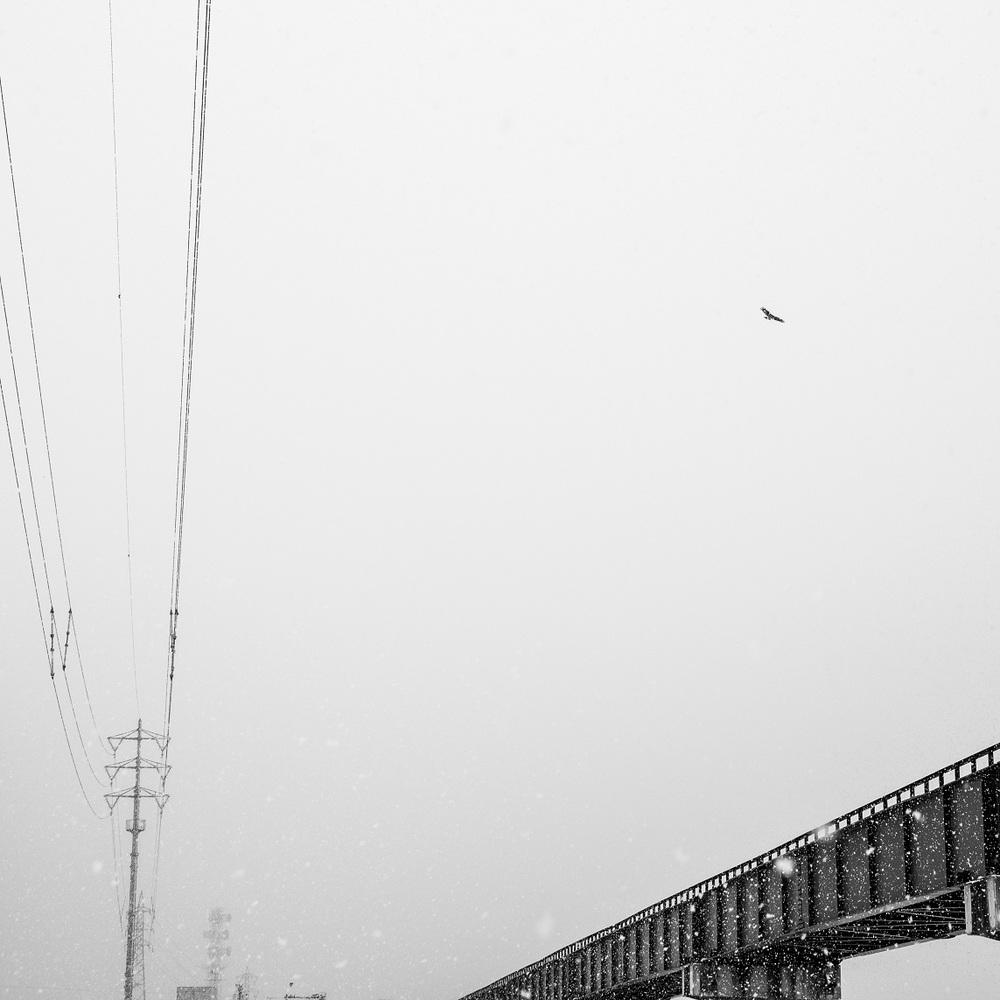 birdtrainlines.jpg
