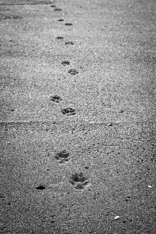 sandprints.jpg