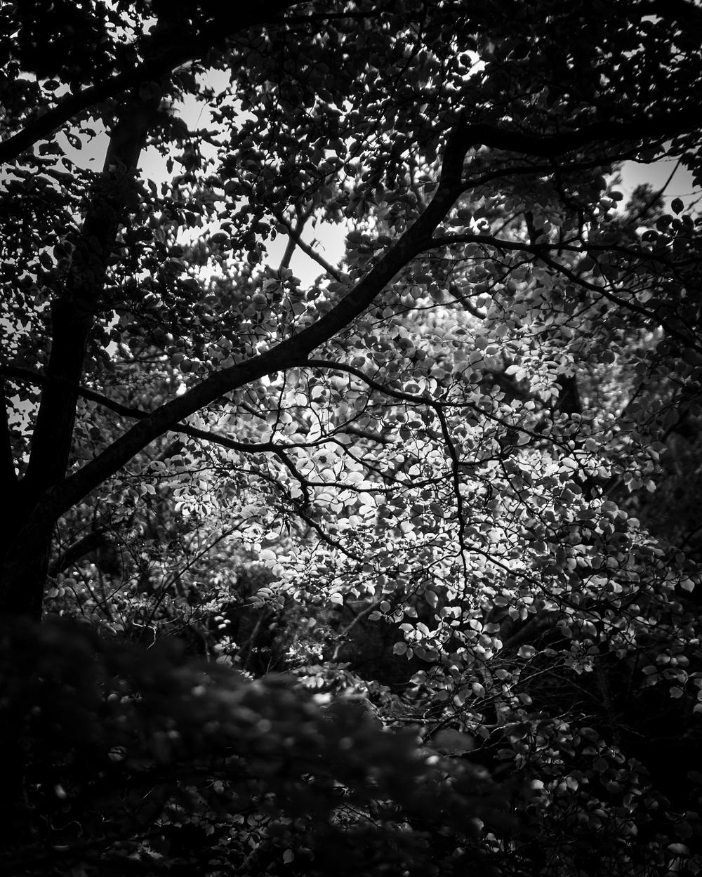 sunlittree.jpg