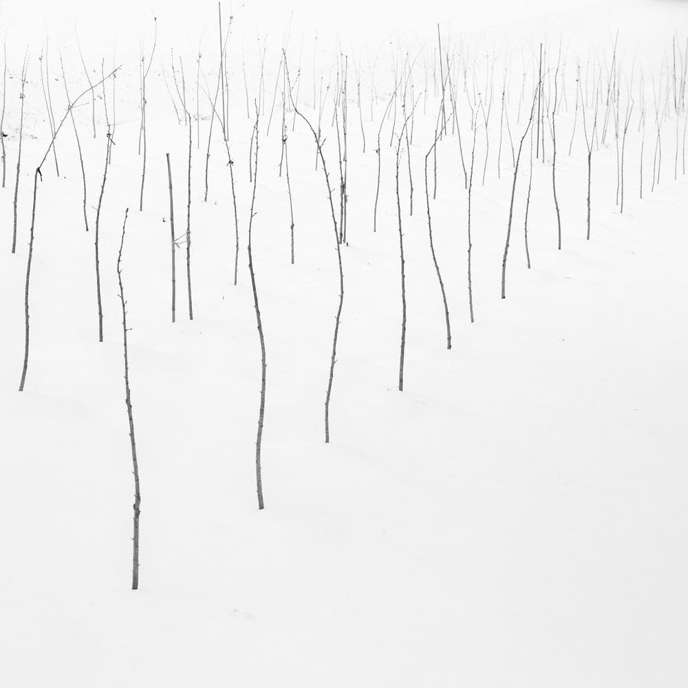wintertwigs.jpg