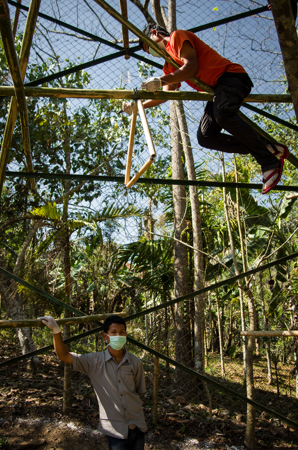 Sengrang (standing) and Tangrik repair bamboo swings.
