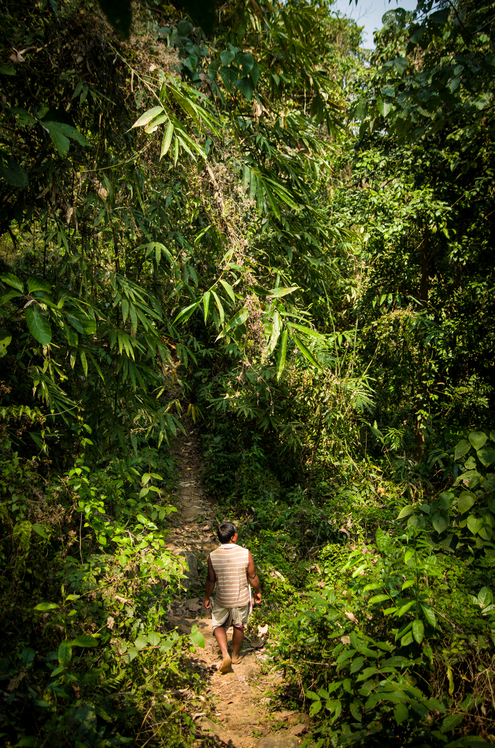 Balram Rasha, a local tribesman from Zaramukhuriya, guides the team through the forests in Chandubi, Assam.