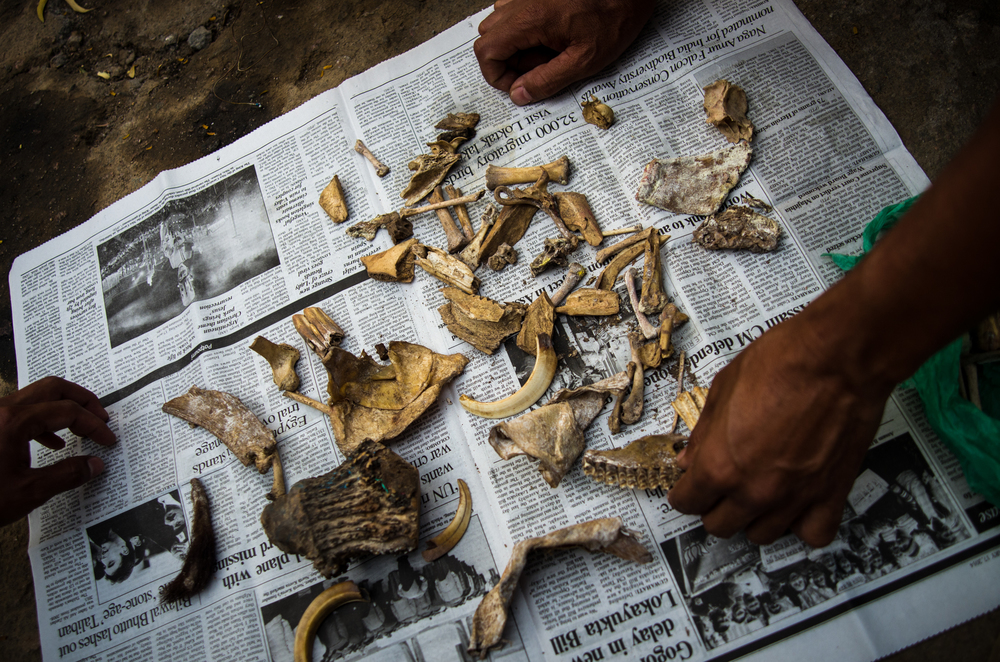 Confiscated pieces of illegally killed animals used for traditional medicine on the black market.