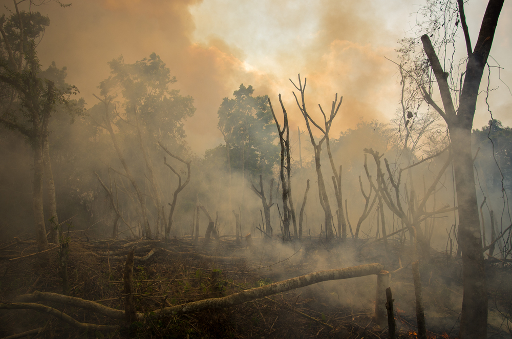 Forest burning in Silsotchigre.  Garo communities will gather and burn entire hills in order to clear the land for crops, usually Areca nut, a recreational carcinogen.