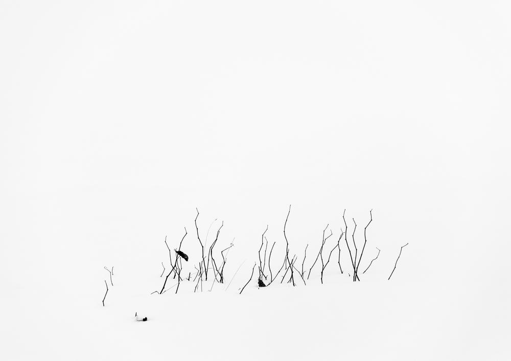 snowscape-1.jpg