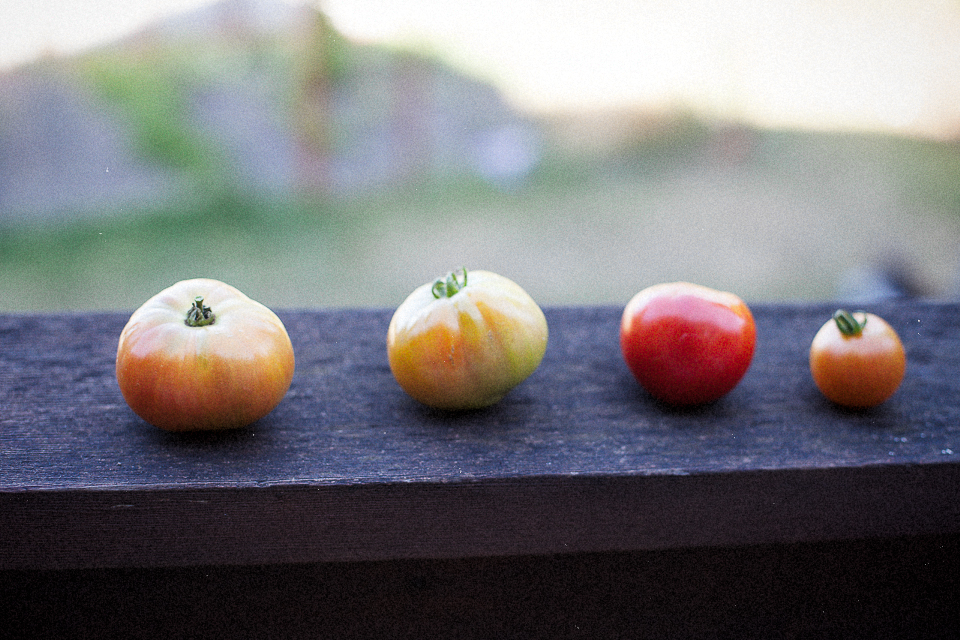 Little tomatoes