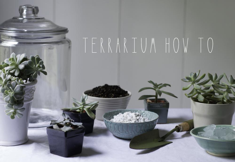 Terrerium-1.jpg