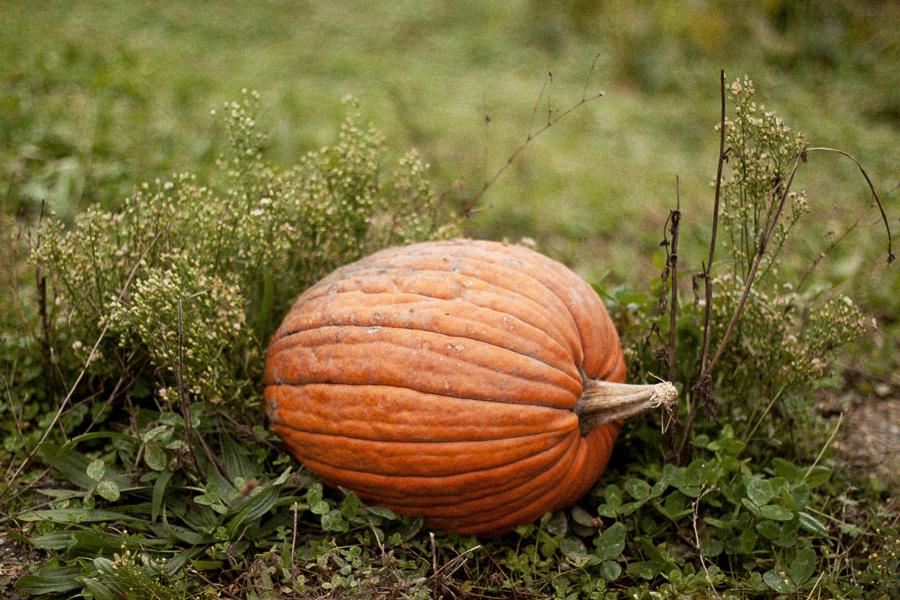 Pumpkin_Patch_Blog_Post-7.jpg
