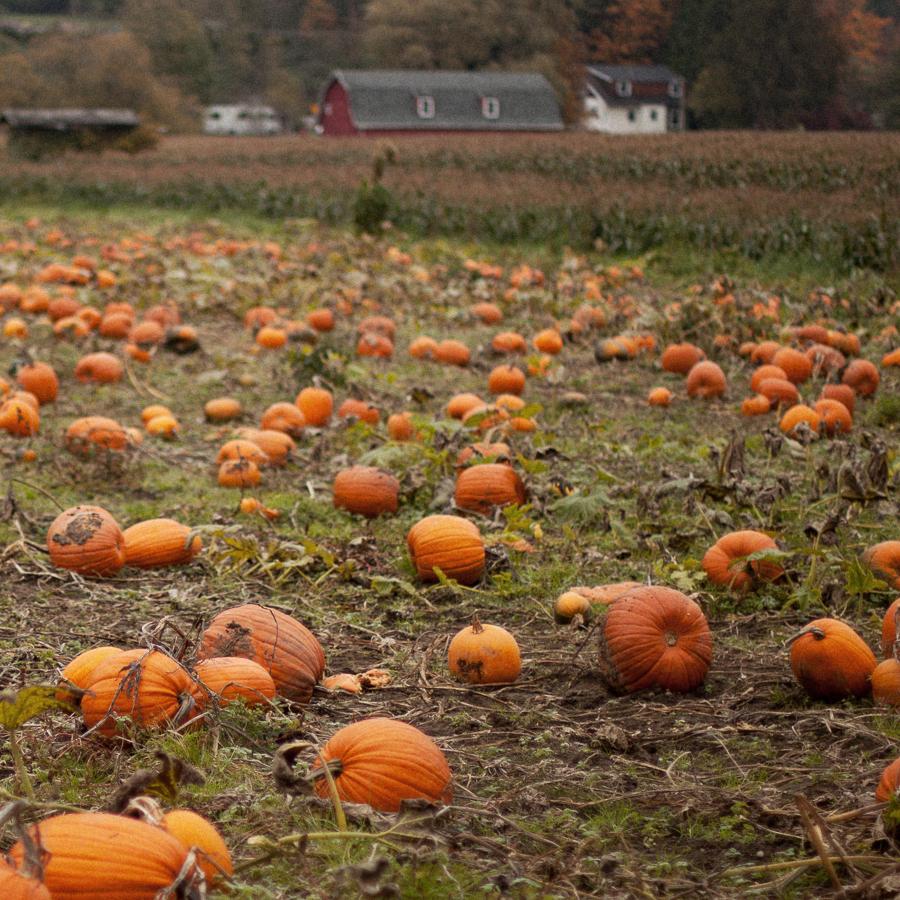 Pumpkin_Patch_Blog_Post-8.jpg
