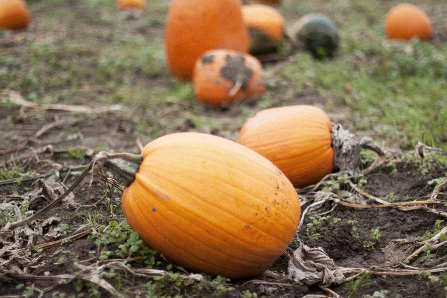 Pumpkin_Patch_Blog_Post-4.jpg