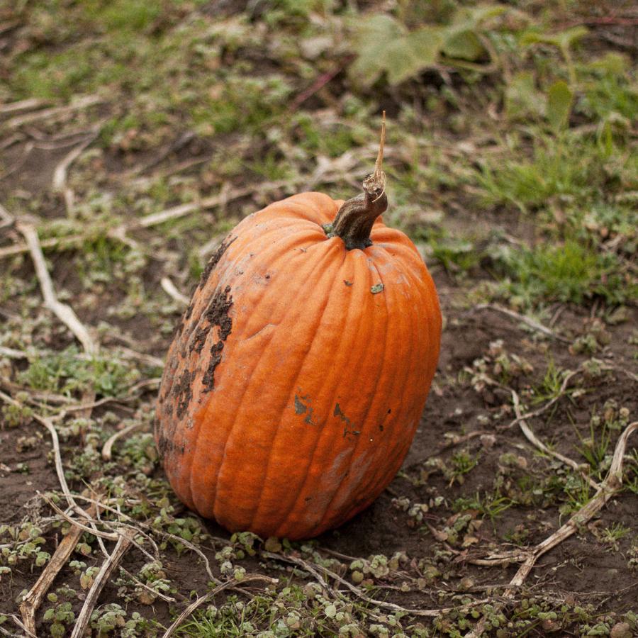 Pumpkin_Patch_Blog_Post-9.jpg