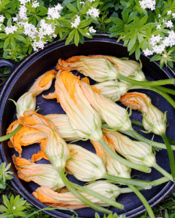 Zucchini Blossoms from the garden