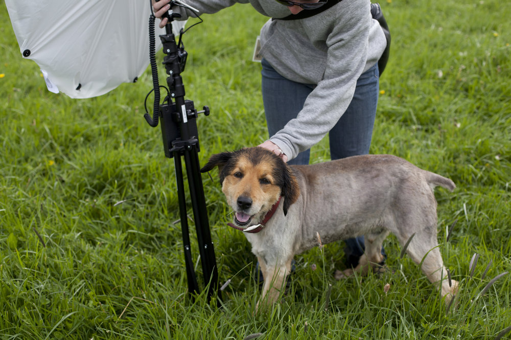 Anne Marie holding a portable battery-powered light while we assisted a farm shoot for a fashion photographer a number of years back in our assisting years. Mick the farm dog pictured above.