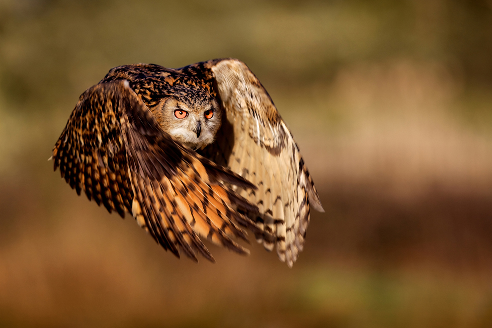 Photo: Mark Bridger