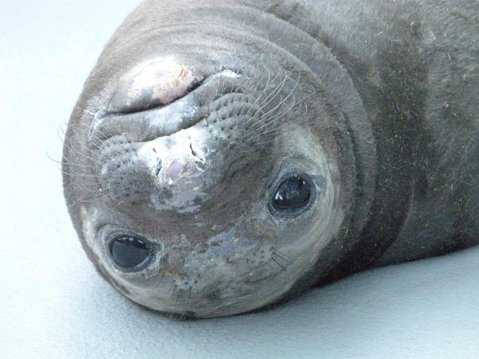 Photo:©  The Marine Mammal Center