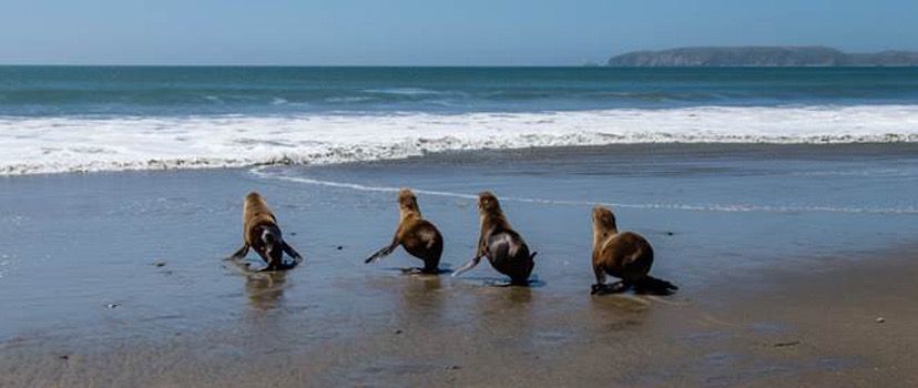 Photo: ©  The Marine Mammal Center