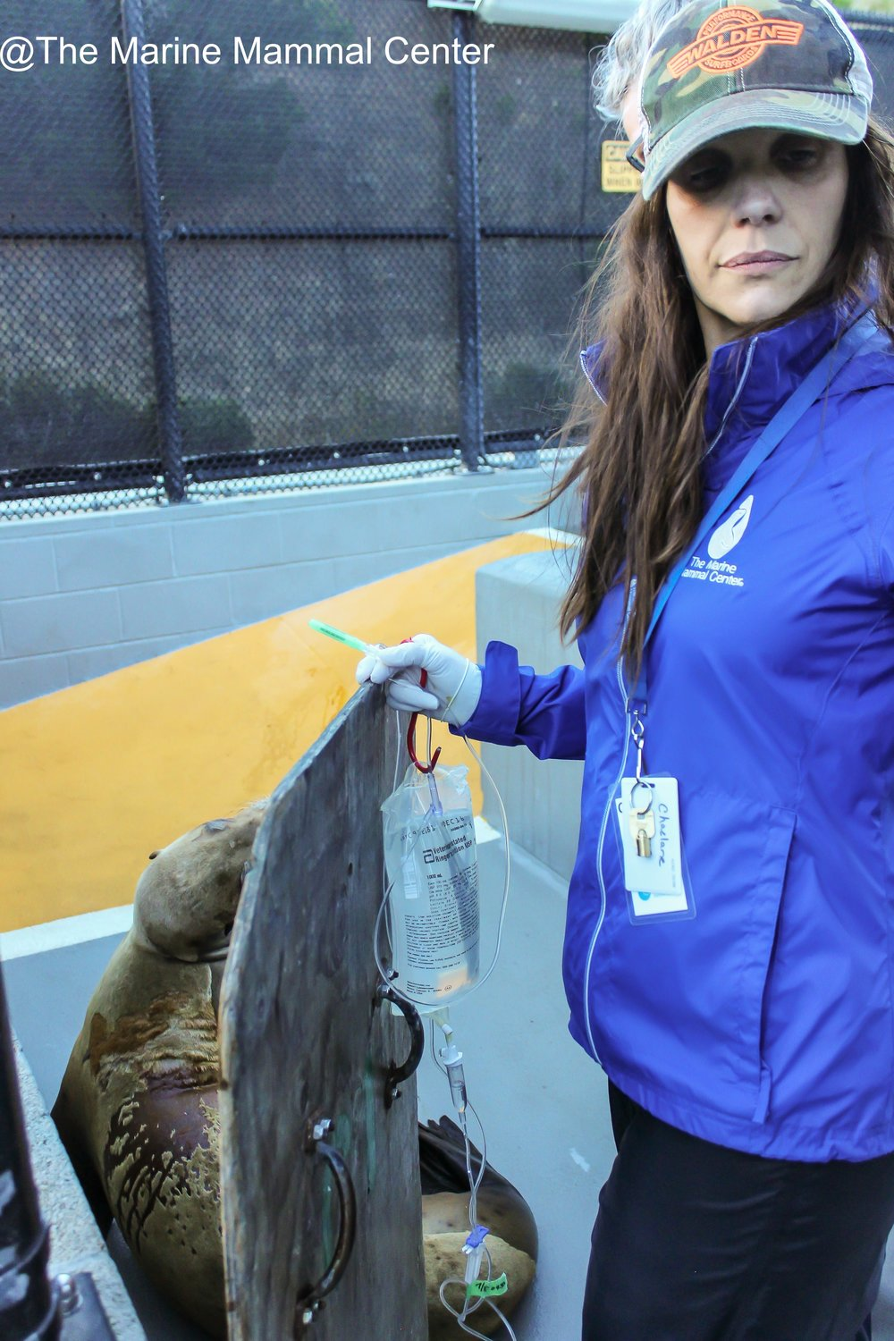 mncts-photo--the-marine-mammal-center-24_28805499400_o.jpg