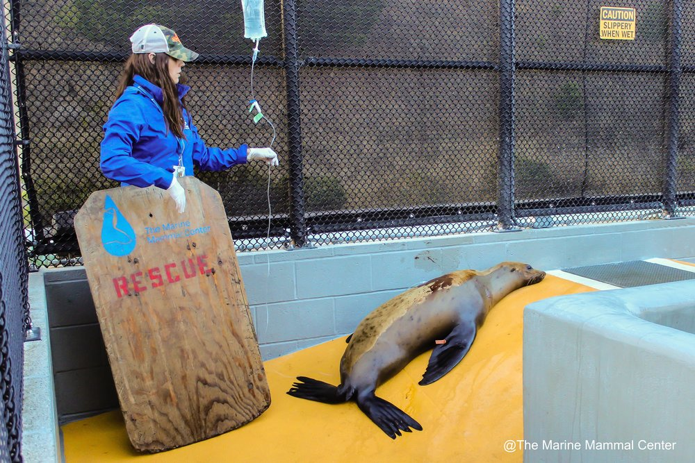 mncts-photo--the-marine-mammal-center-23_29015089801_o.jpg