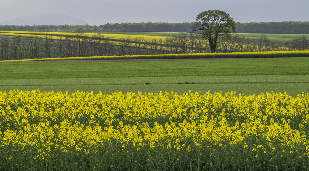 Green and Yellow Countryside.jpg