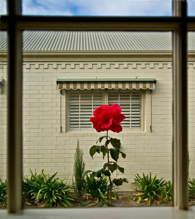 boumic_My_kitchen-window.jpg