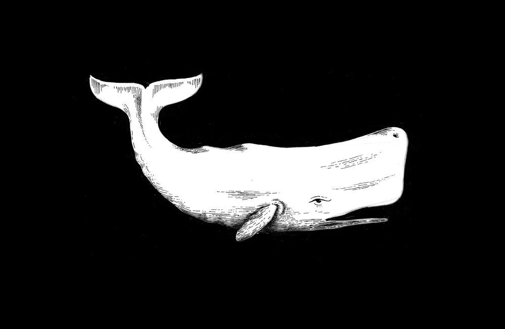 OldWhalersRum-Whale.jpg