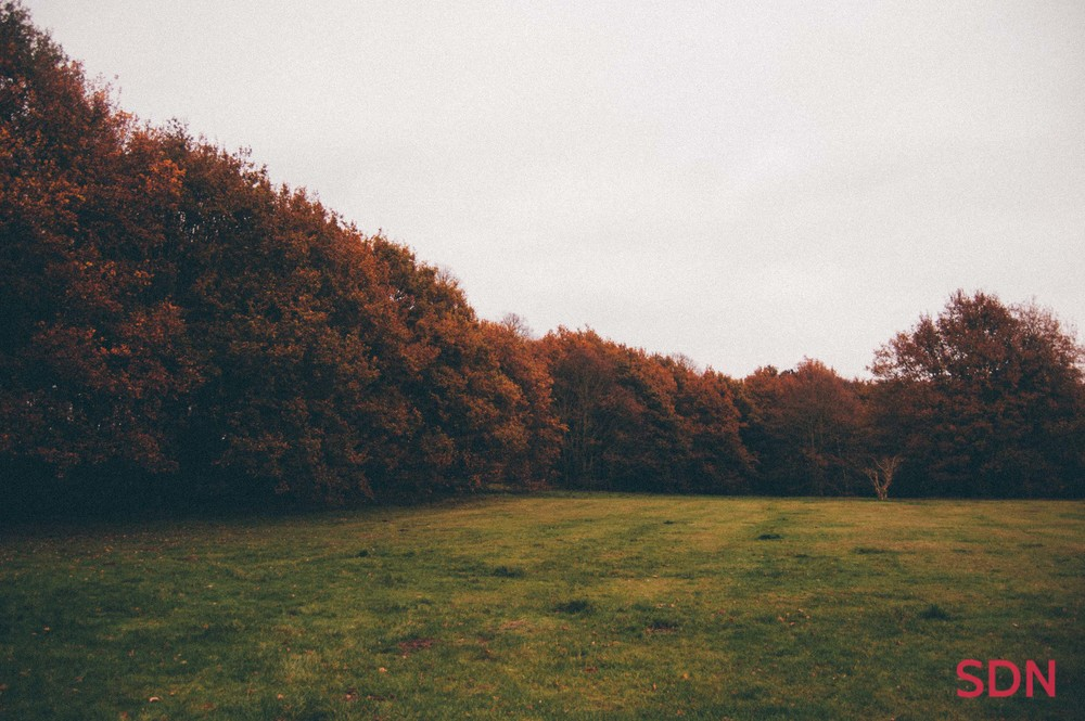 01 - Hucknall Autumn Shot - Sam Nahirny