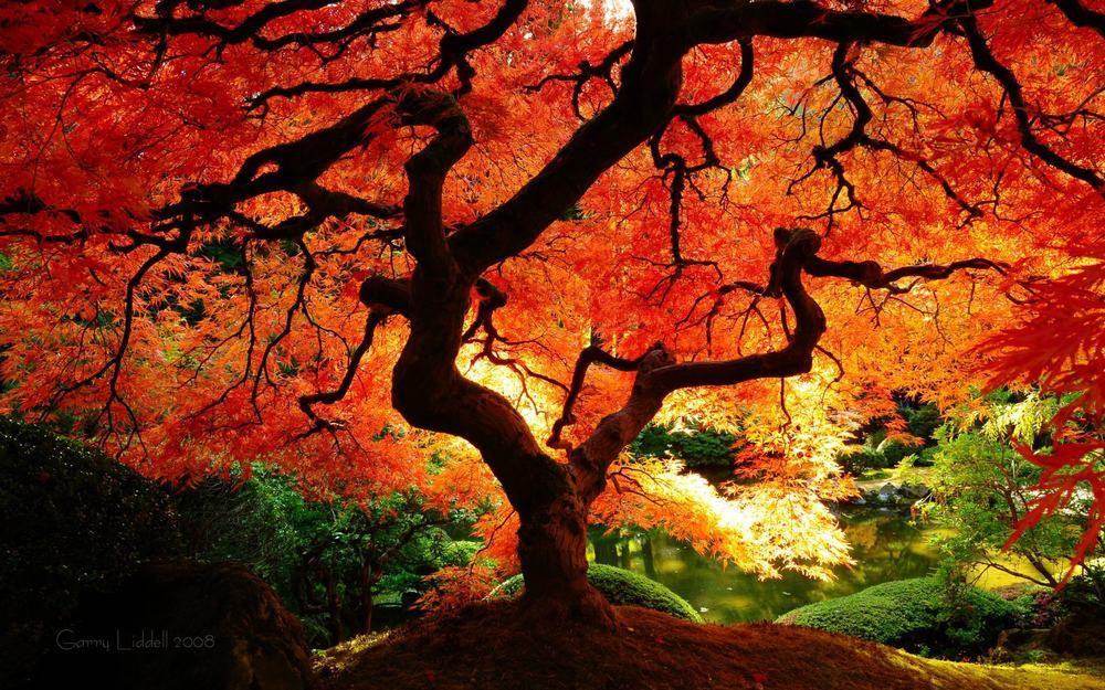 fall_1.jpg