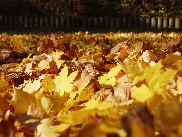 fall-foliage-62787_640.jpg