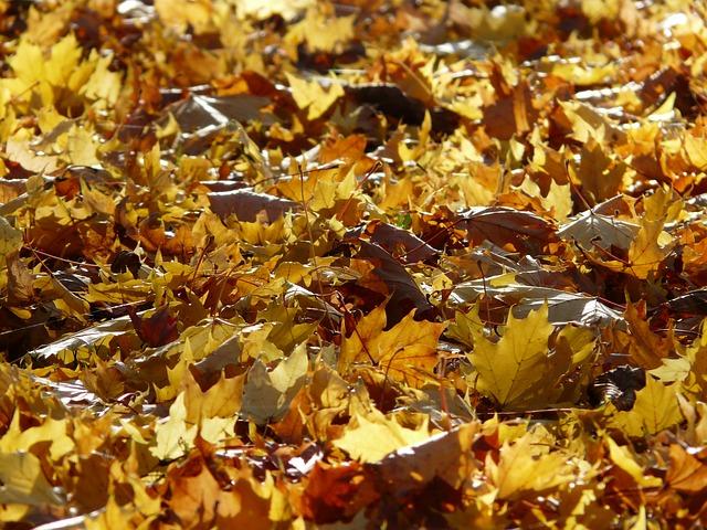 fall-foliage-62809_640.jpg