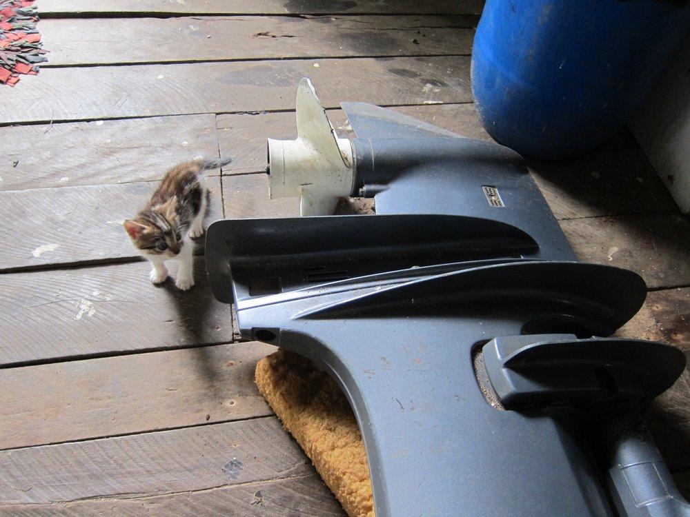 16   Kitten meets outboard, Ratu's house.jpg