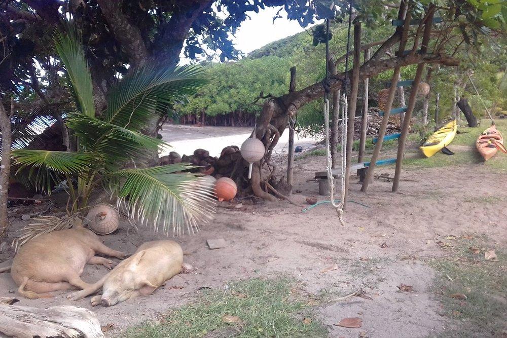 10  Pigs and kayaks, Ratu's house.jpg