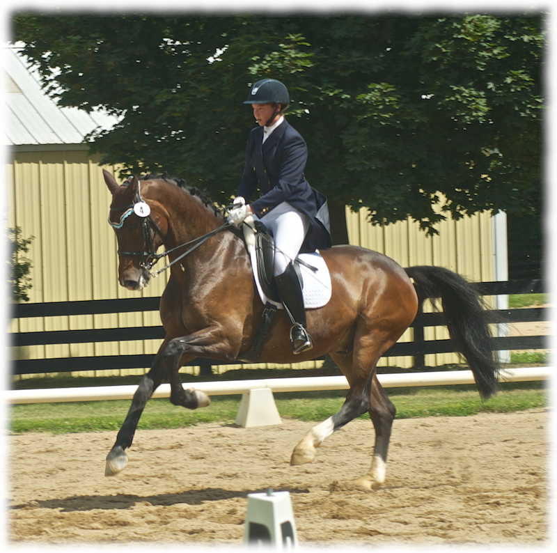 Winspo, owned by Allison Gerlt, showed PSG and made his debut in the Young Rider Individual Test with scores as high as 70%.