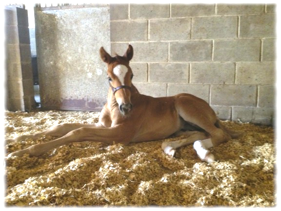 Washburn SW as a weanling