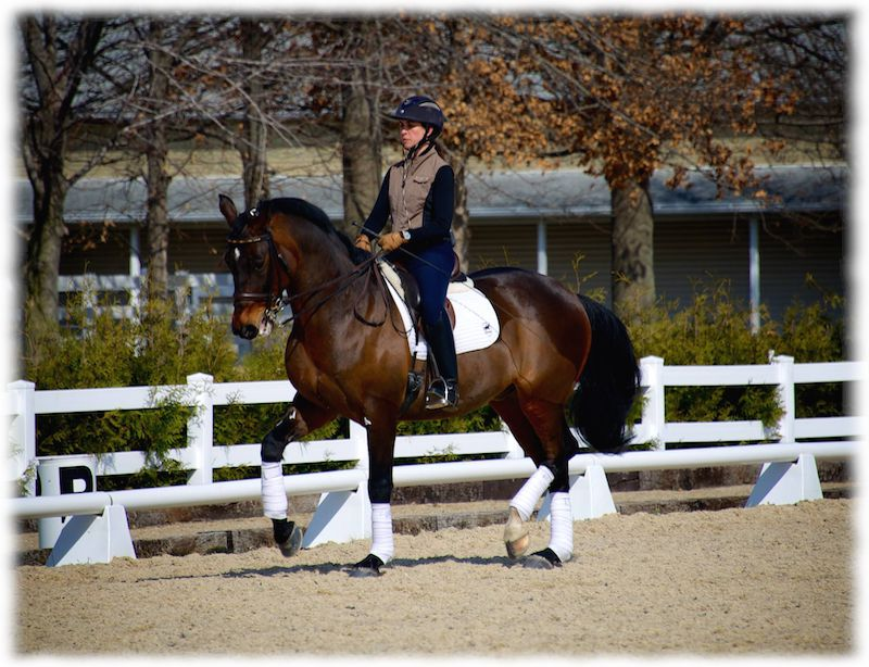 Westerstorm & Kate Fleming-Kuhn owned by Phil Pan & Deb Klamen