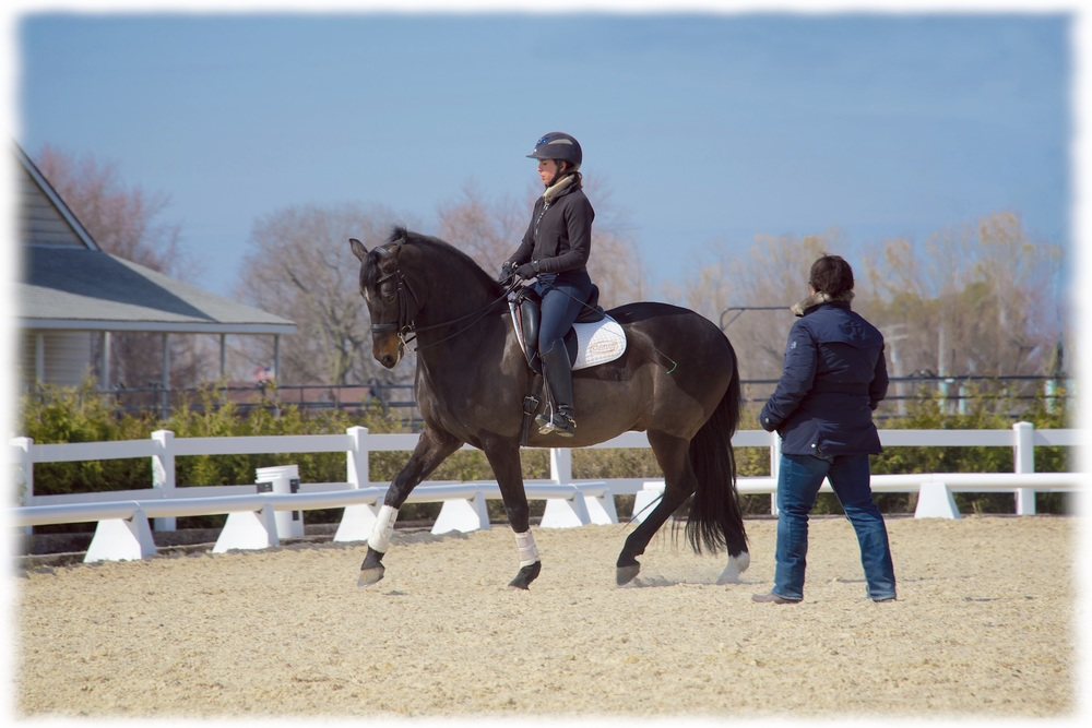 Zlatan M. Ge, owned by Jon & Pinky Noll, ridden by Kate Fleming-Kuhn with Cindy Ishoy