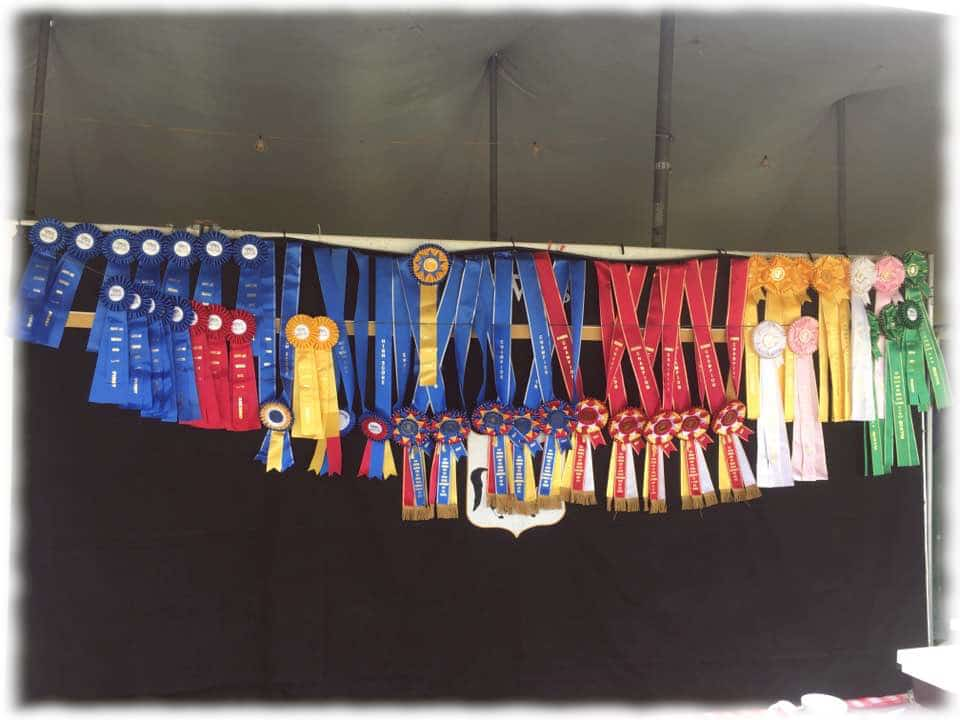 Most of the awards won by StarWest