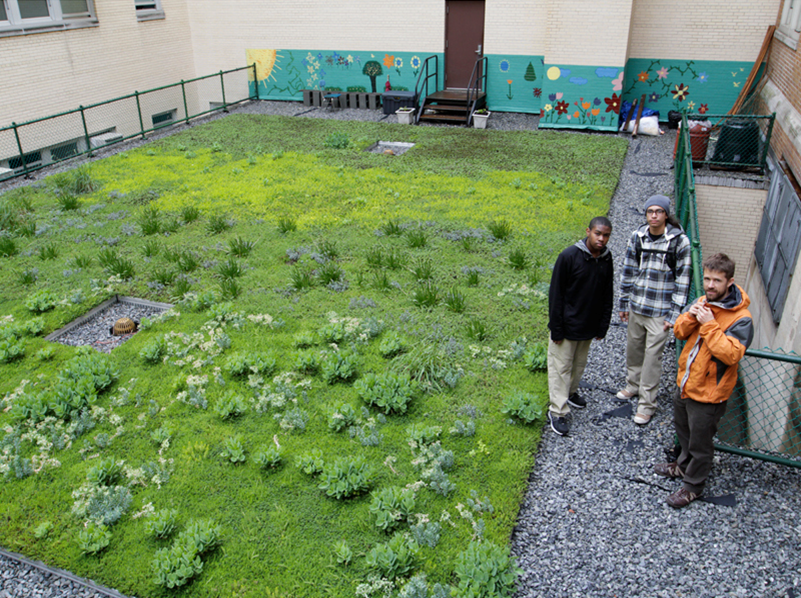 Alfred E. Smith High School Green Roof